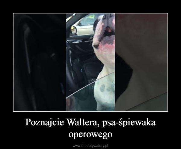 Poznajcie Waltera, psa-śpiewaka operowego –