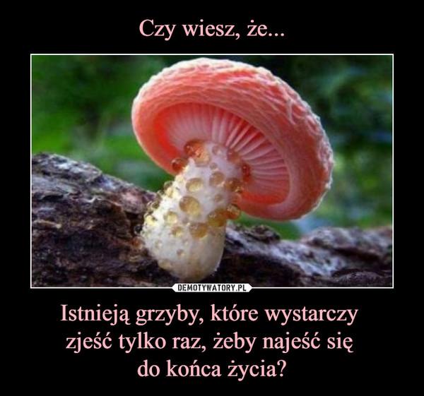 Istnieją grzyby, które wystarczy zjeść tylko raz, żeby najeść się do końca życia? –