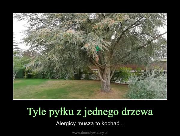 Tyle pyłku z jednego drzewa – Alergicy muszą to kochać...