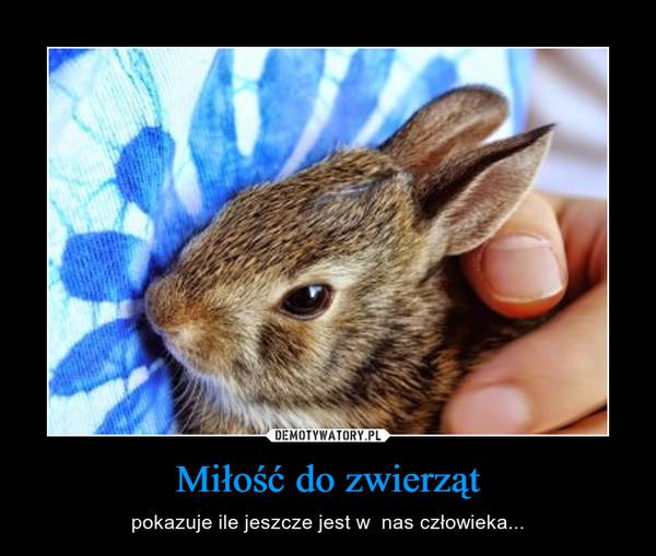 Miłość do zwierząt – pokazuje ile jeszcze jest w  nas człowieka...