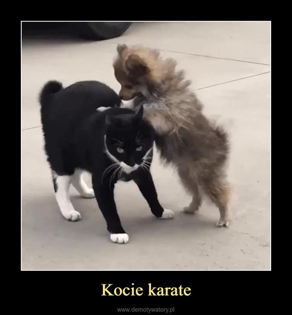 Kocie karate –