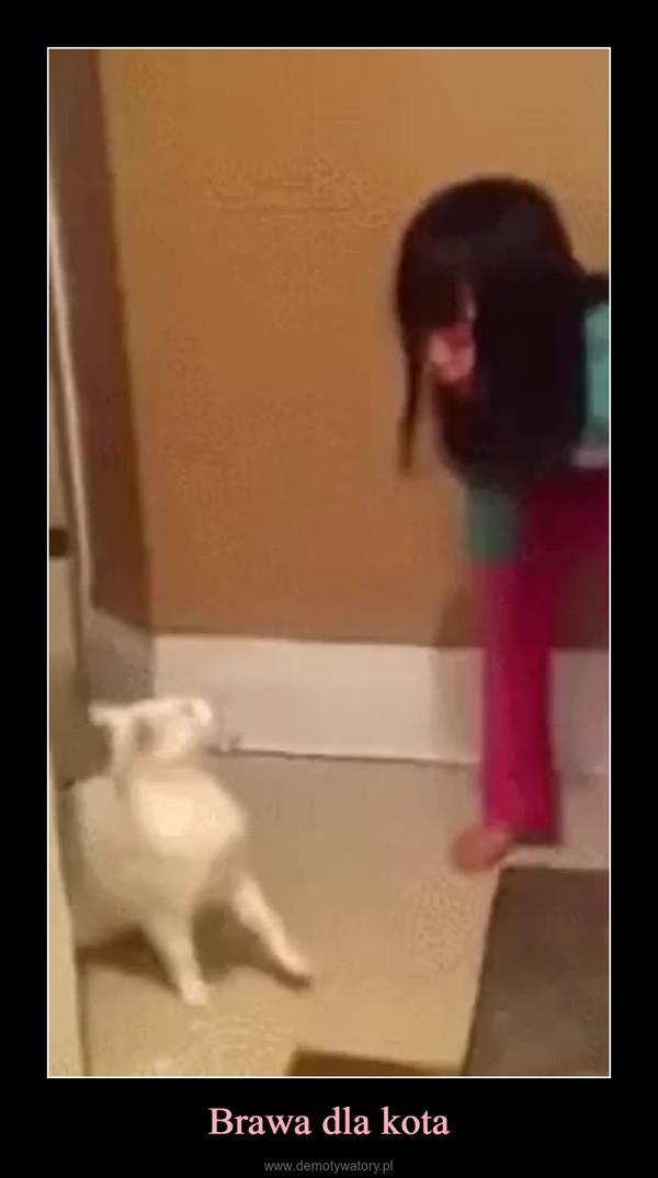 Brawa dla kota –
