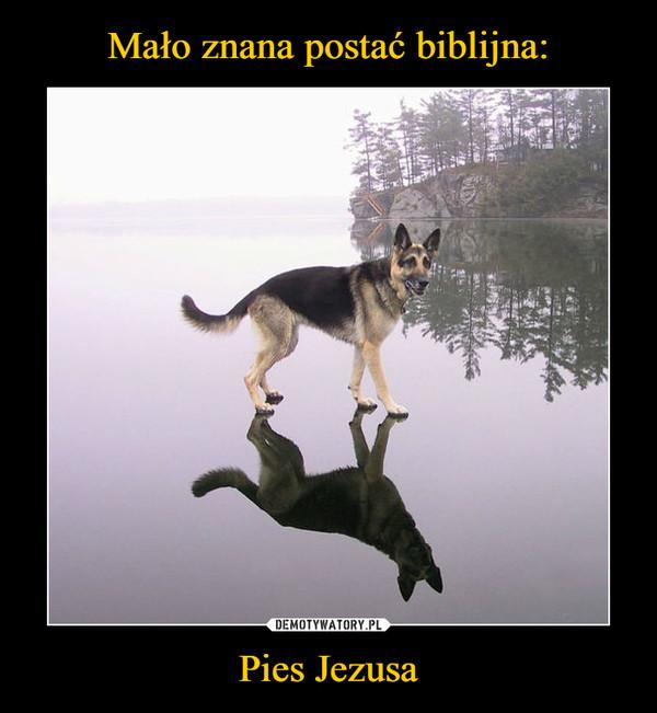 Pies Jezusa –