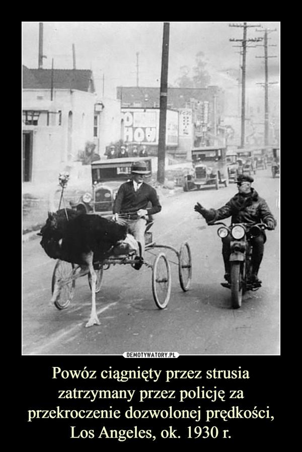 Powóz ciągnięty przez strusia zatrzymany przez policję za przekroczenie dozwolonej prędkości, Los Angeles, ok. 1930 r. –