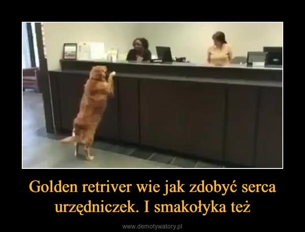 Golden retriver wie jak zdobyć serca urzędniczek. I smakołyka też –