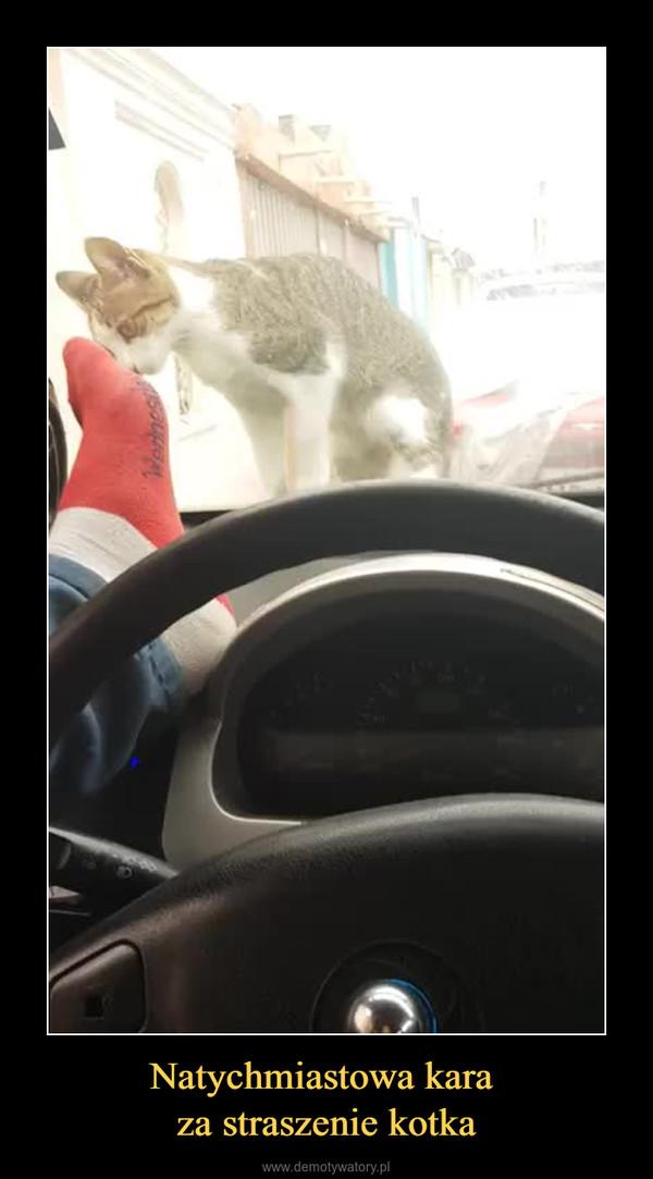 Natychmiastowa kara za straszenie kotka –