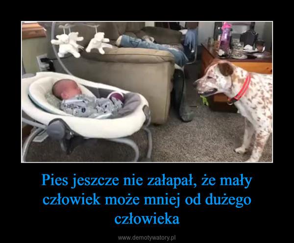 Pies jeszcze nie załapał, że mały człowiek może mniej od dużego człowieka –