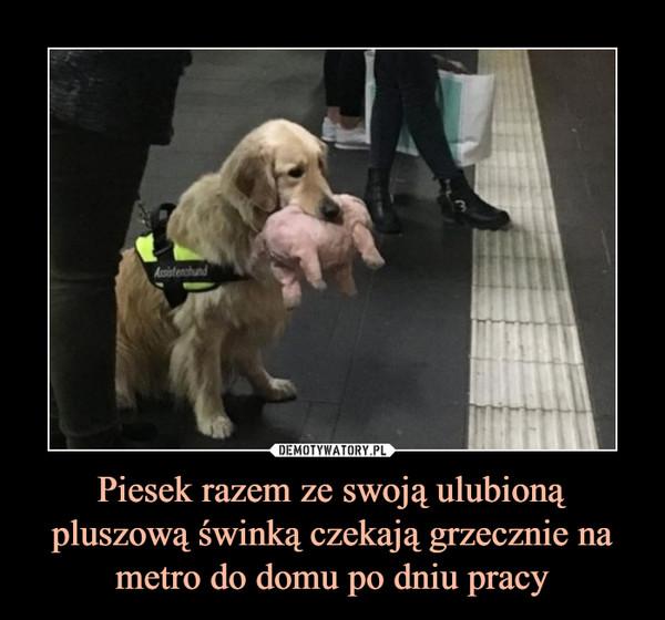 Piesek razem ze swoją ulubioną pluszową świnką czekają grzecznie na metro do domu po dniu pracy –