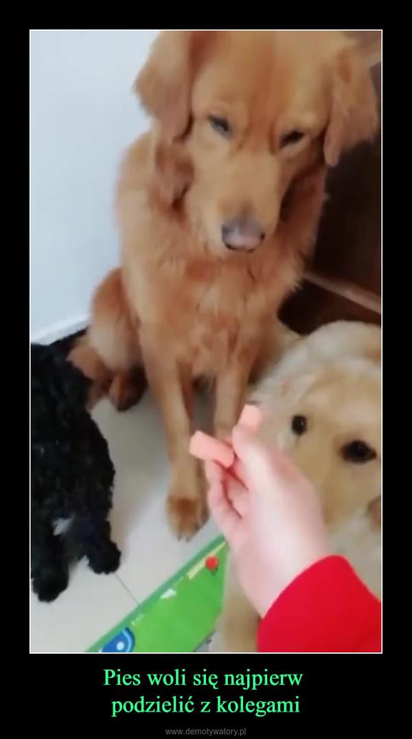 Pies woli się najpierw podzielić z kolegami –