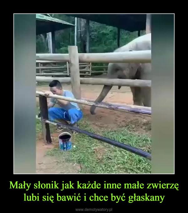 Mały słonik jak każde inne małe zwierzę lubi się bawić i chce być głaskany –