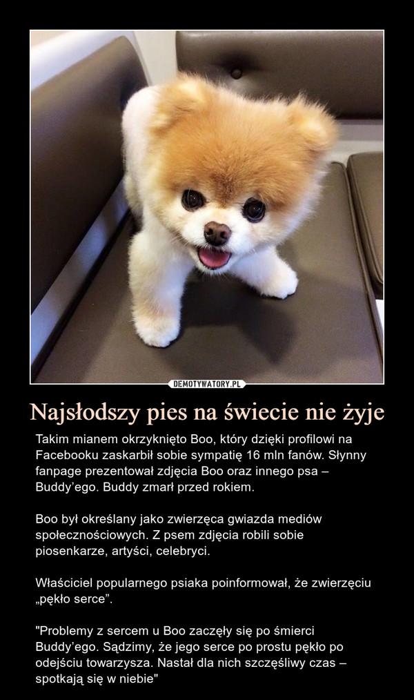 """Najsłodszy pies na świecie nie żyje – Takim mianem okrzyknięto Boo, który dzięki profilowi na Facebooku zaskarbił sobie sympatię 16 mln fanów. Słynny fanpage prezentował zdjęcia Boo oraz innego psa – Buddy'ego. Buddy zmarł przed rokiem.Boo był określany jako zwierzęca gwiazda mediów społecznościowych. Z psem zdjęcia robili sobie piosenkarze, artyści, celebryci.Właściciel popularnego psiaka poinformował, że zwierzęciu """"pękło serce"""".""""Problemy z sercem u Boo zaczęły się po śmierci Buddy'ego. Sądzimy, że jego serce po prostu pękło po odejściu towarzysza. Nastał dla nich szczęśliwy czas – spotkają się w niebie"""""""