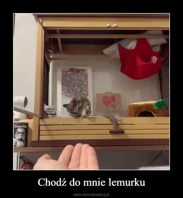 Chodź do mnie lemurku –
