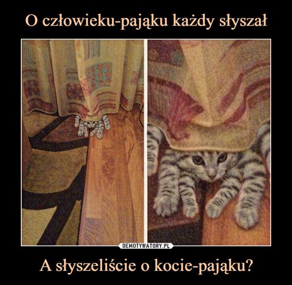 A słyszeliście o kocie-pająku? –