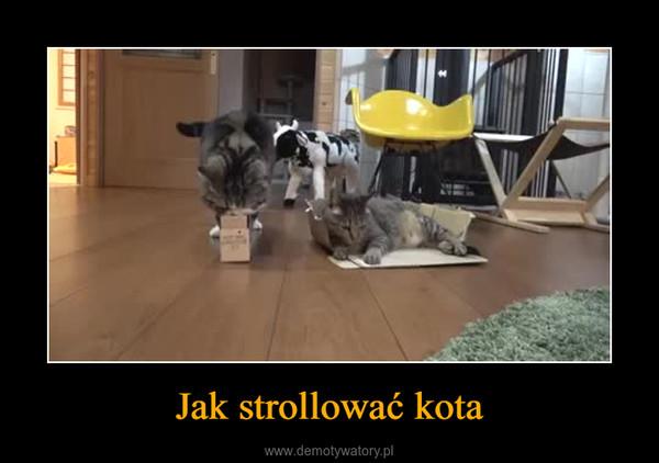 Jak strollować kota –