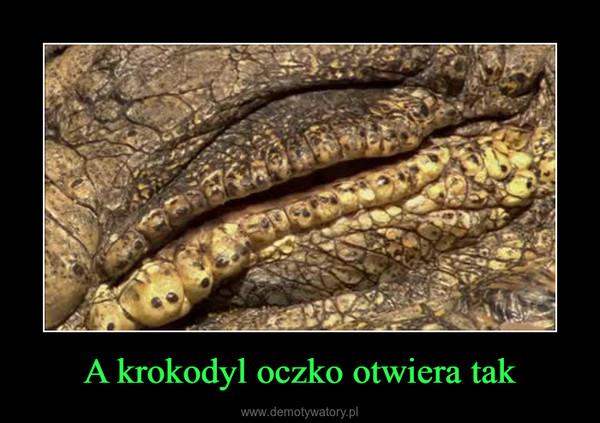 A krokodyl oczko otwiera tak –