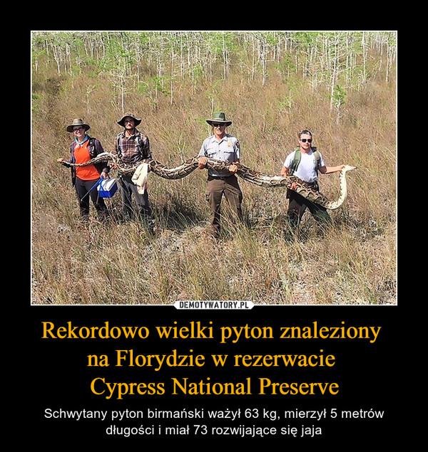 Rekordowo wielki pyton znaleziony na Florydzie w rezerwacie Cypress National Preserve – Schwytany pyton birmański ważył 63 kg, mierzył 5 metrów długości i miał 73 rozwijające się jaja