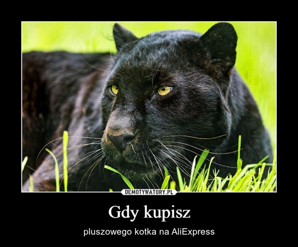 Gdy kupisz – pluszowego kotka na AliExpress
