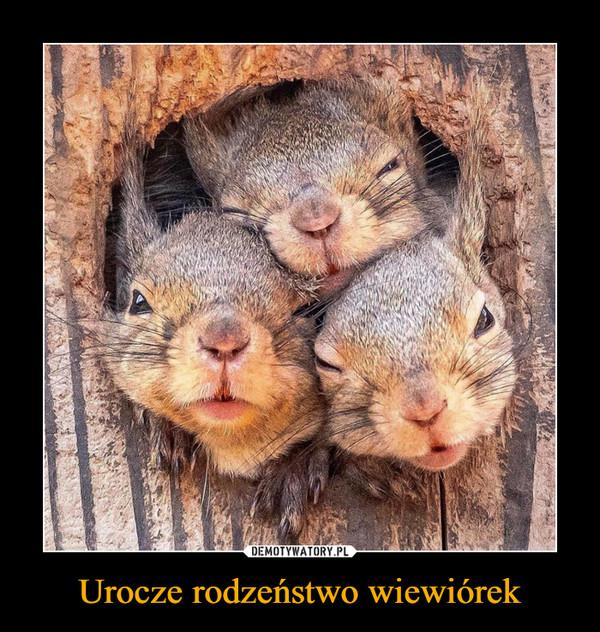 Urocze rodzeństwo wiewiórek –