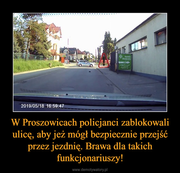 W Proszowicach policjanci zablokowali ulicę, aby jeż mógł bezpiecznie przejść przez jezdnię. Brawa dla takich funkcjonariuszy! –