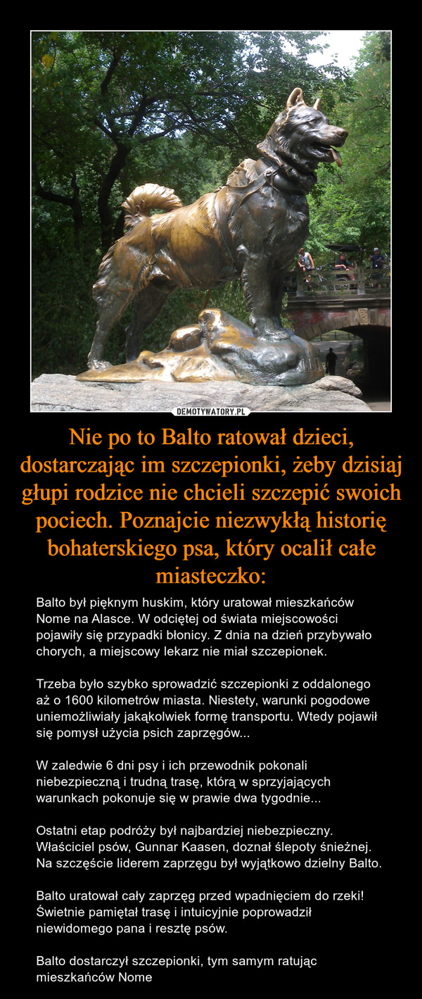 Nie po to Balto ratował dzieci, dostarczając im szczepionki, żeby dzisiaj głupi rodzice nie chcieli szczepić swoich pociech. Poznajcie niezwykłą historię bohaterskiego psa, który ocalił całe miasteczko: – Balto był pięknym huskim, który uratował mieszkańców Nome na Alasce. W odciętej od świata miejscowości pojawiły się przypadki błonicy. Z dnia na dzień przybywało chorych, a miejscowy lekarz nie miał szczepionek.Trzeba było szybko sprowadzić szczepionki z oddalonego aż o 1600 kilometrów miasta. Niestety, warunki pogodowe uniemożliwiały jakąkolwiek formę transportu. Wtedy pojawił się pomysł użycia psich zaprzęgów... W zaledwie 6 dni psy i ich przewodnik pokonali niebezpieczną i trudną trasę, którą w sprzyjających warunkach pokonuje się w prawie dwa tygodnie...Ostatni etap podróży był najbardziej niebezpieczny. Właściciel psów, Gunnar Kaasen, doznał ślepoty śnieżnej. Na szczęście liderem zaprzęgu był wyjątkowo dzielny Balto.Balto uratował cały zaprzęg przed wpadnięciem do rzeki! Świetnie pamiętał trasę i intuicyjnie poprowadził niewidomego pana i resztę psów.Balto dostarczył szczepionki, tym samym ratując mieszkańców Nome