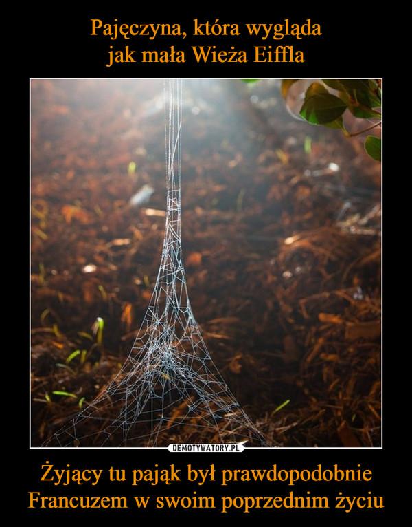 Żyjący tu pająk był prawdopodobnie Francuzem w swoim poprzednim życiu –