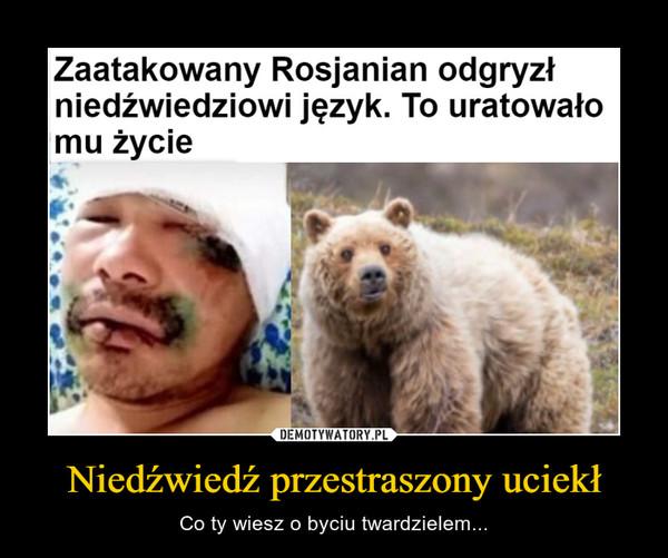 Niedźwiedź przestraszony uciekł – Co ty wiesz o byciu twardzielem... rosjanin odgryzł niedźwiedziowi język