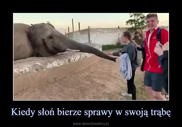 Kiedy słoń bierze sprawy w swoją trąbę –