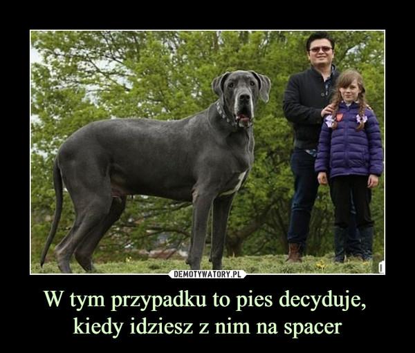 W tym przypadku to pies decyduje, kiedy idziesz z nim na spacer –