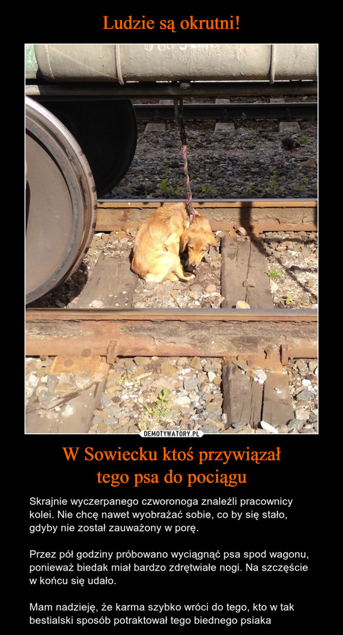 Ludzie są okrutni! W Sowiecku ktoś przywiązał tego psa do pociągu