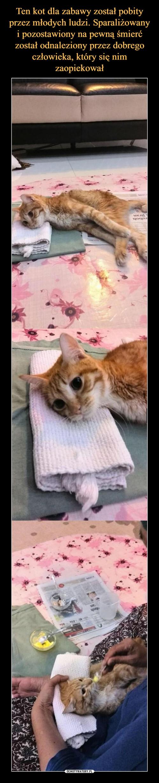 Ten kot dla zabawy został pobity przez młodych ludzi. Sparaliżowany i pozostawiony na pewną śmierć został odnaleziony przez dobrego człowieka, który się nim zaopiekował