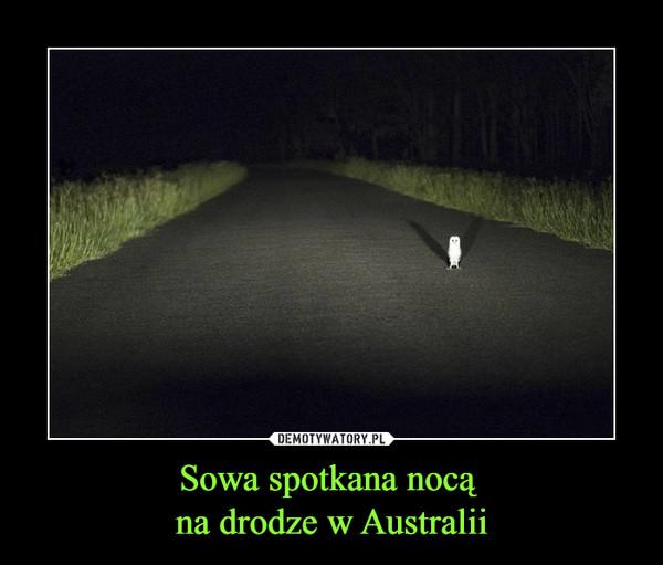 Sowa spotkana nocą na drodze w Australii –
