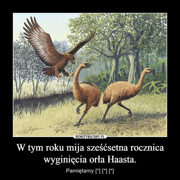 W tym roku mija sześćsetna rocznica wyginięcia orła Haasta. – Pamiętamy [*] [*] [*]