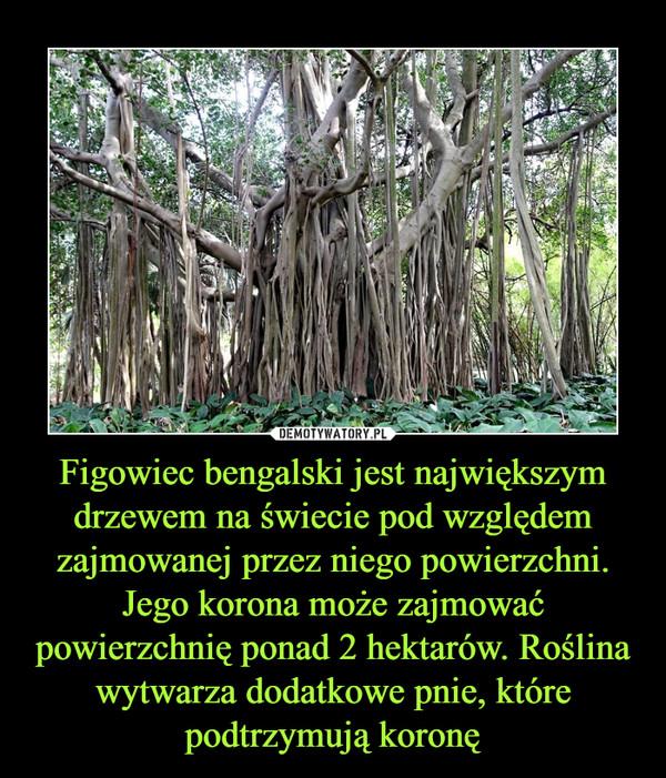 Figowiec bengalski jest największym drzewem na świecie pod względem zajmowanej przez niego powierzchni. Jego korona może zajmować powierzchnię ponad 2 hektarów. Roślina wytwarza dodatkowe pnie, które podtrzymują koronę –