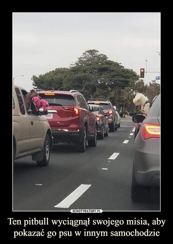Ten pitbull wyciągnął swojego misia, aby pokazać go psu w innym samochodzie –