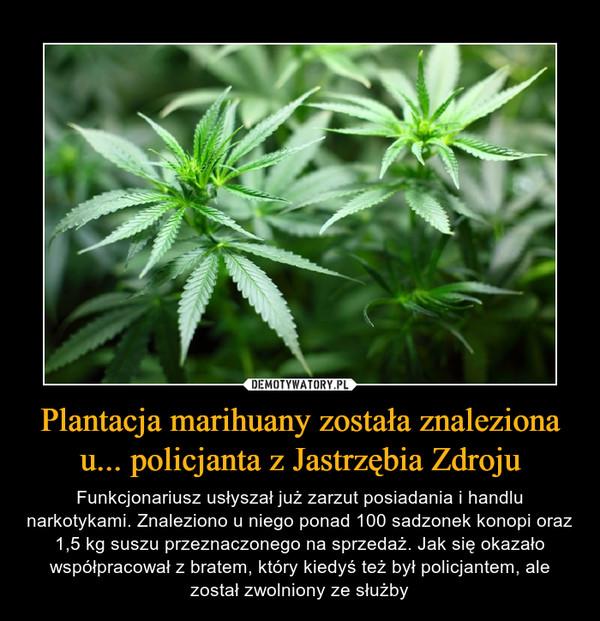 Plantacja marihuany została znaleziona u... policjanta z Jastrzębia Zdroju – Funkcjonariusz usłyszał już zarzut posiadania i handlu narkotykami. Znaleziono u niego ponad 100 sadzonek konopi oraz 1,5 kg suszu przeznaczonego na sprzedaż. Jak się okazało współpracował z bratem, który kiedyś też był policjantem, ale został zwolniony ze służby