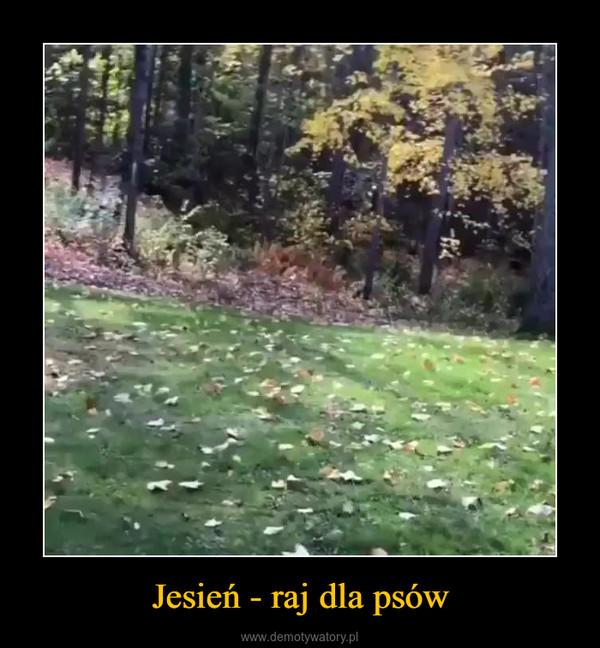 Jesień - raj dla psów –