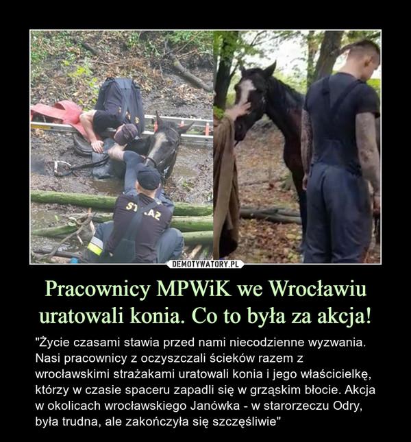 """Pracownicy MPWiK we Wrocławiu uratowali konia. Co to była za akcja! – """"Życie czasami stawia przed nami niecodzienne wyzwania. Nasi pracownicy z oczyszczali ścieków razem z wrocławskimi strażakami uratowali konia i jego właścicielkę, którzy w czasie spaceru zapadli się w grząskim błocie. Akcja w okolicach wrocławskiego Janówka - w starorzeczu Odry, była trudna, ale zakończyła się szczęśliwie"""""""