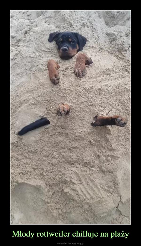 Młody rottweiler chilluje na plaży –
