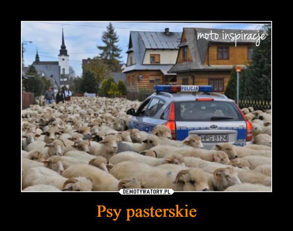 Psy pasterskie –