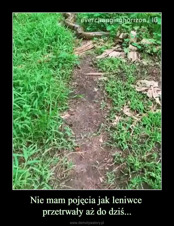 Nie mam pojęcia jak leniwce przetrwały aż do dziś... –