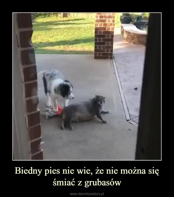 Biedny pies nie wie, że nie można się śmiać z grubasów –