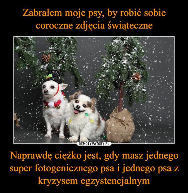 Naprawdę ciężko jest, gdy masz jednego super fotogenicznego psa i jednego psa z kryzysem egzystencjalnym –