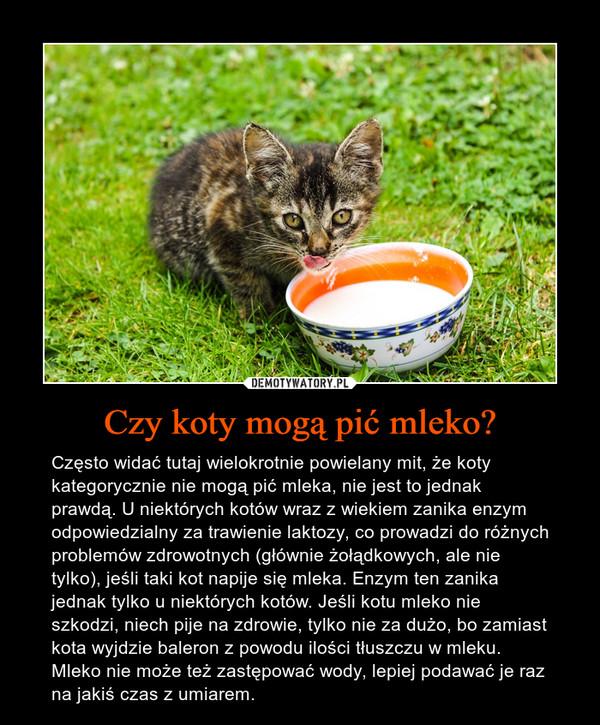 Czy koty mogą pić mleko? – Często widać tutaj wielokrotnie powielany mit, że koty kategorycznie nie mogą pić mleka, nie jest to jednak prawdą. U niektórych kotów wraz z wiekiem zanika enzym odpowiedzialny za trawienie laktozy, co prowadzi do różnych problemów zdrowotnych (głównie żołądkowych, ale nie tylko), jeśli taki kot napije się mleka. Enzym ten zanika jednak tylko u niektórych kotów. Jeśli kotu mleko nie szkodzi, niech pije na zdrowie, tylko nie za dużo, bo zamiast kota wyjdzie baleron z powodu ilości tłuszczu w mleku. Mleko nie może też zastępować wody, lepiej podawać je raz na jakiś czas z umiarem.