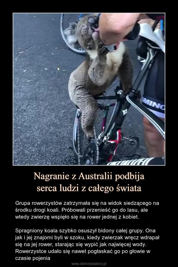 Nagranie z Australii podbijaserca ludzi z całego świata – Grupa rowerzystów zatrzymała się na widok siedzącego na środku drogi koali. Próbowali przenieść go do lasu, ale wtedy zwierzę wspięło się na rower jednej z kobiet.Spragniony koala szybko osuszył bidony całej grupy. Ona jak i jej znajomi byli w szoku, kiedy zwierzak wręcz wdrapał się na jej rower, starając się wypić jak najwięcej wody. Rowerzystce udało się nawet pogłaskać go po głowie w czasie pojenia