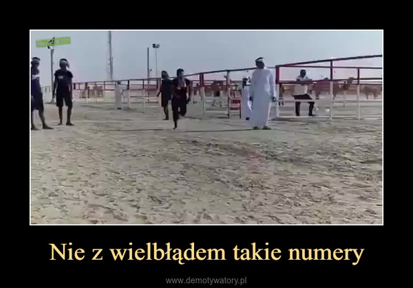 Nie z wielbłądem takie numery –