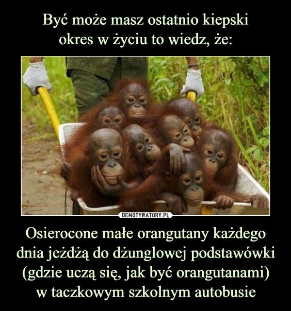 Osierocone małe orangutany każdego dnia jeżdżą do dżunglowej podstawówki (gdzie uczą się, jak być orangutanami)w taczkowym szkolnym autobusie –