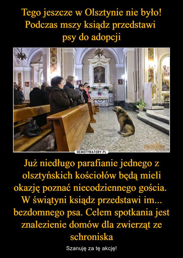 Już niedługo parafianie jednego z olsztyńskich kościołów będą mieli okazję poznać niecodziennego gościa. W świątyni ksiądz przedstawi im... bezdomnego psa. Celem spotkania jest znalezienie domów dla zwierząt ze schroniska – Szanuję za tę akcję!