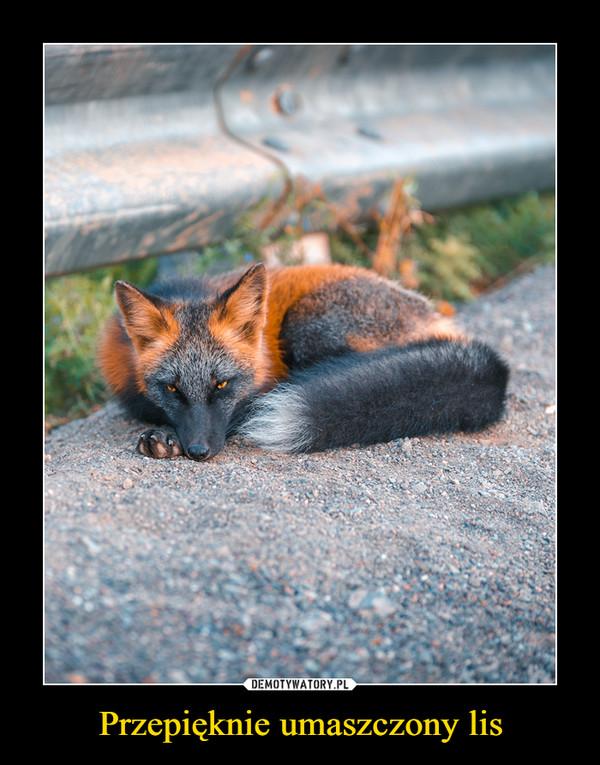 Przepięknie umaszczony lis –