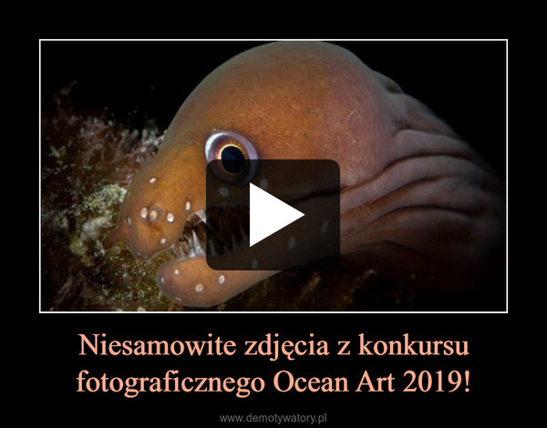 Niesamowite zdjęcia z konkursu fotograficznego Ocean Art 2019! –