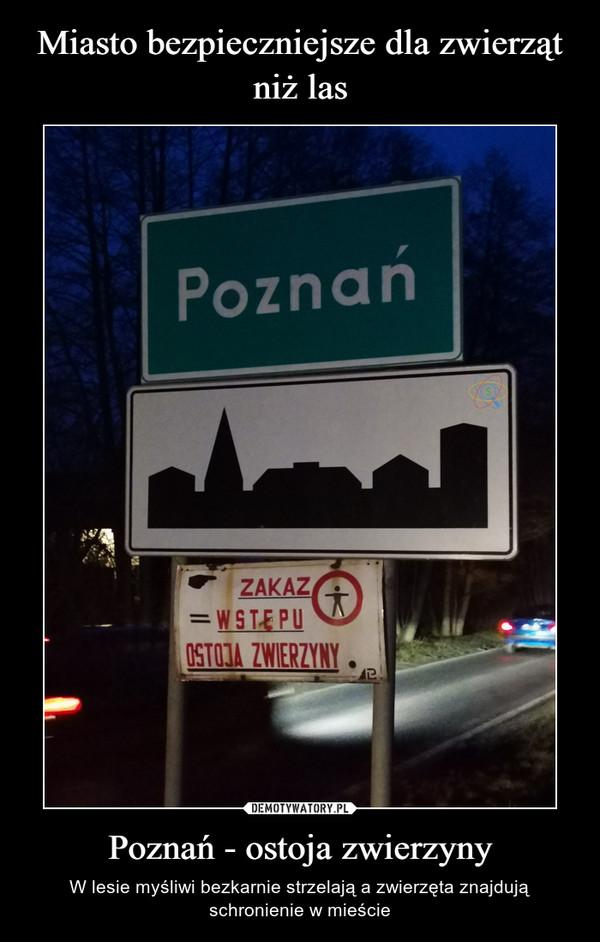 Poznań - ostoja zwierzyny – W lesie myśliwi bezkarnie strzelają a zwierzęta znajdują schronienie w mieście